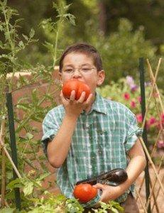 лето, помидор, дача